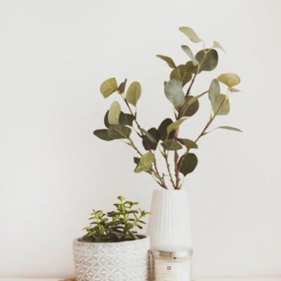 Plantas a domicilio en Valencia